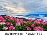 beautiful flower and fog on the ...   Shutterstock . vector #710234596