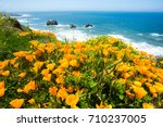 A Field Of California Poppies...