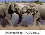 Постер, плакат: two fighting elephants at