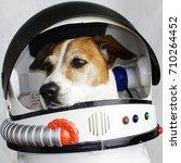 cute dog portrait in a...   Shutterstock . vector #710264452