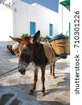 donkey in mykonos  greece | Shutterstock . vector #710301226