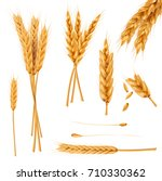 bunch of wheat ears  dried... | Shutterstock .eps vector #710330362