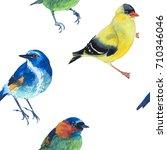 watercolor exotic birds... | Shutterstock . vector #710346046