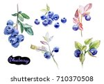 blueberry watercolor hand draw... | Shutterstock . vector #710370508