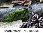 green moss | Shutterstock . vector #710400058