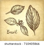 basil leaves set. ink sketch on ... | Shutterstock .eps vector #710405866