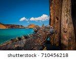 The Marine Iguana. Galapagos...