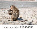 baby monkey after bath eat... | Shutterstock . vector #710504536