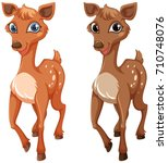 two fawns on white background...
