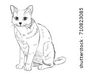 cat sitting pose . sketch... | Shutterstock .eps vector #710823085
