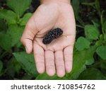 kids hand holding mulberry... | Shutterstock . vector #710854762
