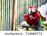 colorful parrots   Shutterstock . vector #710880772