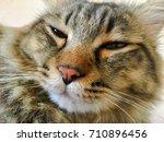 cat | Shutterstock . vector #710896456