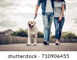Stock photo cropped image of romantic couple is on a walk in the city with their dog labrador beautiful young 710906455