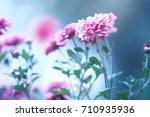 beautiful garden pink flowers... | Shutterstock . vector #710935936