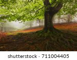 tree roots in a foggy misty... | Shutterstock . vector #711004405