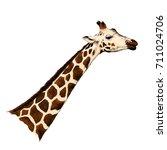 giraffe head sketch vector... | Shutterstock .eps vector #711024706