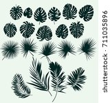 tropical plant leaves vector... | Shutterstock .eps vector #711035896
