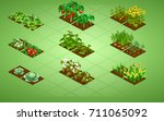 set of isometric vegetables... | Shutterstock .eps vector #711065092