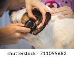 Small photo of Ear examine by the veterinarian for dog in vet clinic.