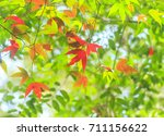 green and red maple leaf | Shutterstock . vector #711156622