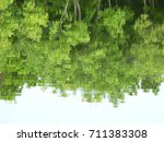 green tree water reflection in... | Shutterstock . vector #711383308