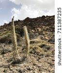 wild volcano plants | Shutterstock . vector #711387235