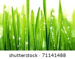 Grass With Water Drops In...