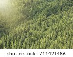 Small photo of Healthy coniferous trees growing in the national park. Beautiful green conifers and foliaceous forest. Lungs of the world.
