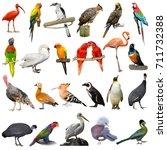 Birds set isolated on white background