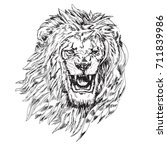 head of a lion with open mouth... | Shutterstock .eps vector #711839986