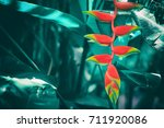 tropical vivid color flower... | Shutterstock . vector #711920086