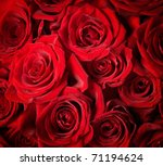 Stock photo red roses background selective focus 71194624
