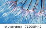 purple abstract dandelion seeds ... | Shutterstock . vector #712065442