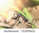 photo of a funny little lizard... | Shutterstock . vector #712095622