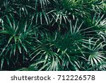 green leaves of palm background ... | Shutterstock . vector #712226578