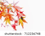 beautiful maple leaves in the... | Shutterstock . vector #712236748