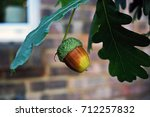 Small photo of Acorn
