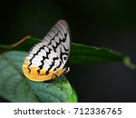 Small photo of Pallid faun (Melanocyma faunula), a beautiful butterfly, perched on green leaf in tropical rainforest at Taman Negara national park, Pahang, Malaysia. Wild animal in natural habitat, dark background.