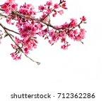 cherry blossom  sakura flowers... | Shutterstock . vector #712362286