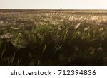 beautiful spider web in dew...   Shutterstock . vector #712394836