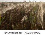 beautiful spider web in dew...   Shutterstock . vector #712394902