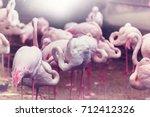 flamingo in peru | Shutterstock . vector #712412326