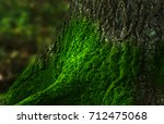 detail moss on the tree on... | Shutterstock . vector #712475068