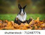 little funny rabbit sitting in... | Shutterstock . vector #712487776