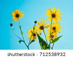 bright yellow summer flowers on ... | Shutterstock . vector #712538932