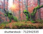 ukraine  beech forest in the... | Shutterstock . vector #712542535