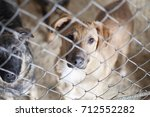 save me. photo of stray dogs... | Shutterstock . vector #712552282