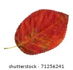 Upper Surface Of A Leaf Of The...