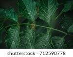 green leaf on a green background | Shutterstock . vector #712590778
